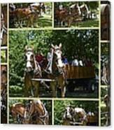 If You Love Belgian Horses Canvas Print