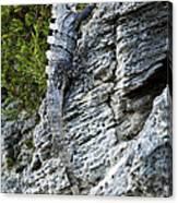 Iguana En La Roca Canvas Print