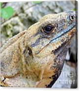 Iguana Of The Uxmal Pyramids In Yucatan Mexico Canvas Print