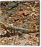 Iguana On A Trail In Manuel Antonio National Preserve-costa Rica Canvas Print