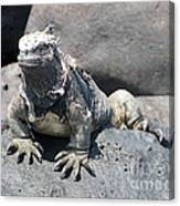 Iguana Or Prehistory Survivor Canvas Print