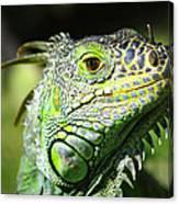 Iguana Smile Canvas Print