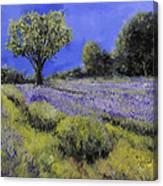 Il Campo Di Lavanda Canvas Print