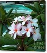 Ilan Ilan Flowers Canvas Print