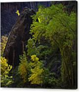 Illuminated Shrub Canvas Print
