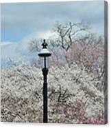 Illuminating Blossoms Canvas Print