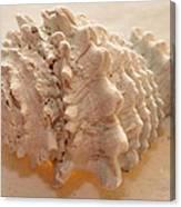 Illumination Series Sea Shells 11 Canvas Print