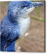 I'm Blue - Penguin Canvas Print