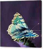 Imaginary Butterfly Canvas Print