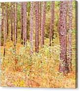 Imaginary Forest Canvas Print