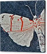 Imago Canvas Print