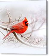 Img_2559-8 - Northern Cardinal Canvas Print