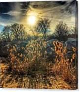Crispy Wheat Canvas Print
