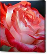 Imperfect Rose Canvas Print