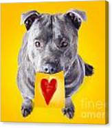 Imploring Staffie With A Sticky Note On His Mouth Canvas Print