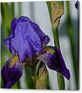 Impossible Imagined Iris Canvas Print