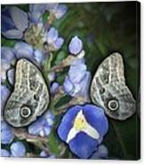 In A Butterfly Garden Two Canvas Print