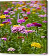In A Field Of Flowers Canvas Print