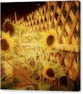 Sunflowers And Lattice Canvas Print