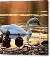 In A Stream Of Golden Light Canvas Print