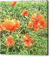 In Flanders Fields The Poppies Grow Canvas Print