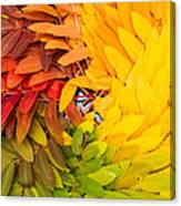 In Living Color Canvas Print