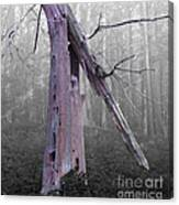 In Memory Of A Tree Canvas Print