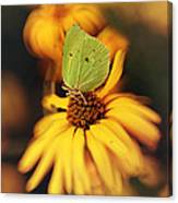 In My Garden Canvas Print