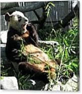 In Need Of More Sleep. Er Shun Giant Panda Series. Toronto Zoo Canvas Print
