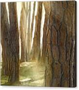 In Pine Forest Canvas Print