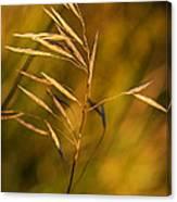 In Praise Of Grass 3 Canvas Print