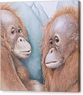 In Safe Hands - Orang Utans Canvas Print