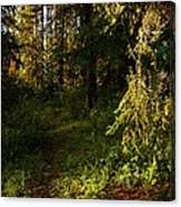 In The Druid Cathedral Canvas Print