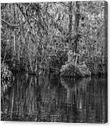 In The Everglades Canvas Print