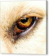 In The Eyes.... Canvas Print