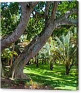 In The Garden. Mauritius Canvas Print