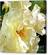 Sunny Rose Garden Canvas Print