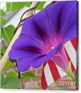 In The Morning - Summertime Canvas Print