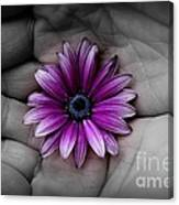 In The Palm Of My Hand Canvas Print