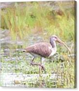In The Pasture Grass Canvas Print