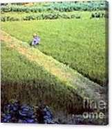 In The Rice Fields Canvas Print