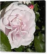 In The Rose Garden Canvas Print