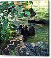 In The Shadows Of The Creek Canvas Print