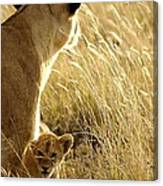 In The Tall Grass Canvas Print
