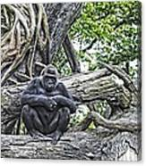 In The Treetop Canvas Print