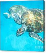 In The Turquoise Blue Canvas Print