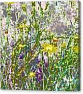 Incandescent Daisies Canvas Print