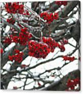 Incased Berries Canvas Print