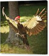 Incoming Pileated Canvas Print