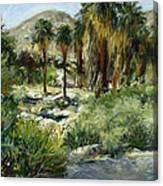 Indian Canyon Palms Canvas Print
